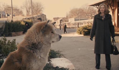 Movie About Akita Dog